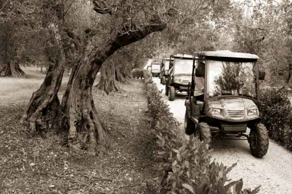 Eco Tour Cantina Montevibiano